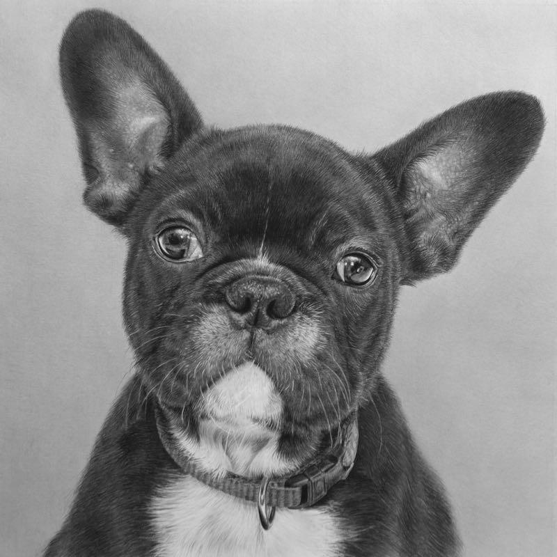 Frenchie, pencil artwork, 2020