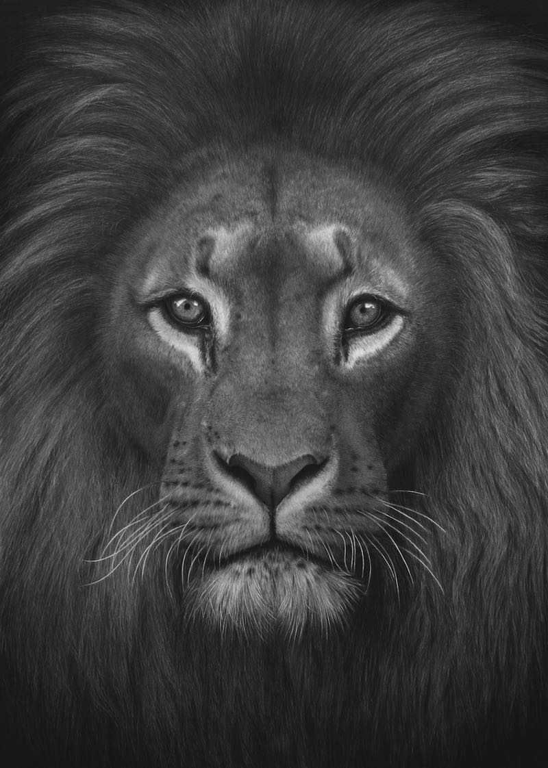 The Head of the King, pencil artwork, 2021