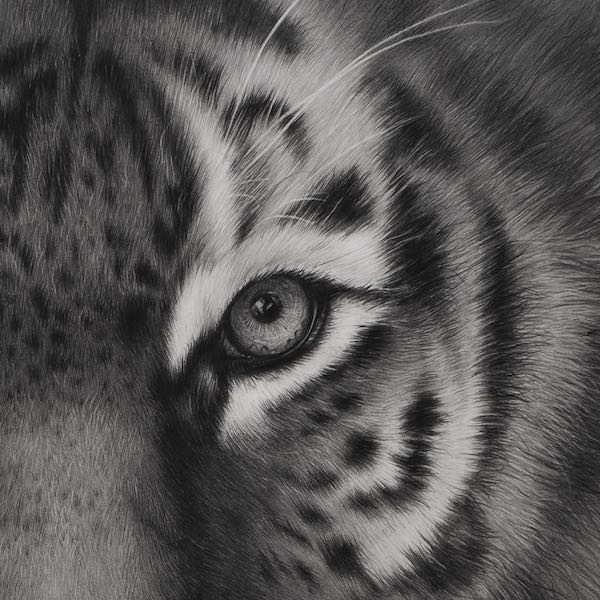 Memory tiger print product photo